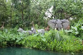 dżungla2