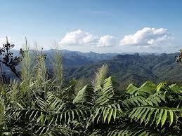 dżungla4