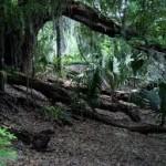 dżungla1